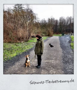 Sakuras-Tierbetreuung-Hundebetreuung-Gassi-Service-Dogsitter-Hundesitter