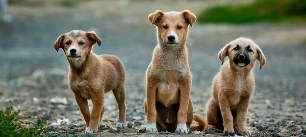 Hundebetreuung auch für mehrere Hunde. Sakuras Tierbetreuung ist Ihr Hundesitter