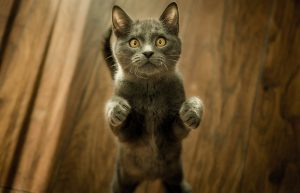 Neugierige Katze die sich zur Kamera hochstreckt
