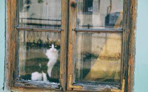 Katze am Fenster guckt nach draußen