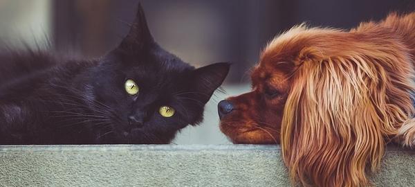 Schwarze Katze und brauner Hund liegen zusammen auf dem Sofa